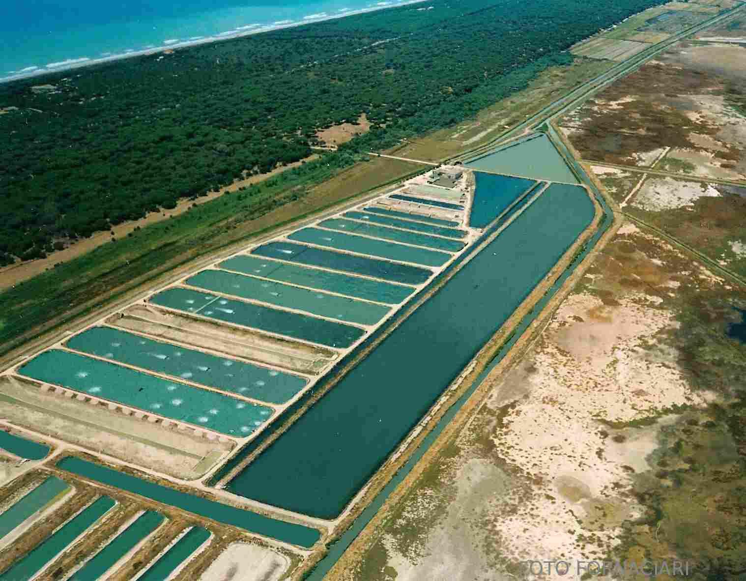 Azienda ittica il padule le spigole di qualit e la for Vasche per allevamento ittico
